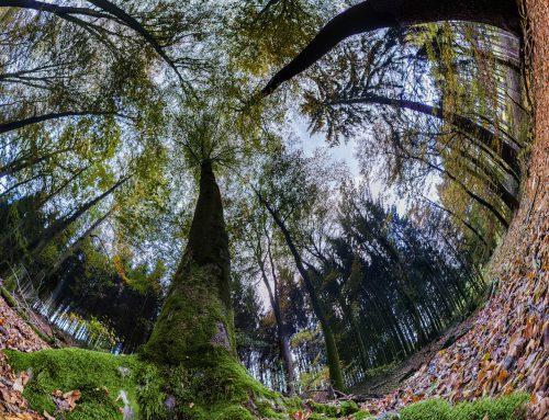 Veränderung – gute Vorsätze für 2019 – wenn Du den Baum vor lauter Wald nicht siehst